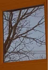 window-perspective-tree