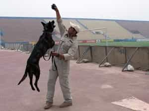 Bomb Sniffing Dogs in Iraq